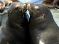cambria-seals