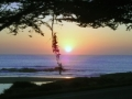 cambria_-moonstone_sunset-300x191